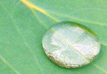 eucaliptusz olaj